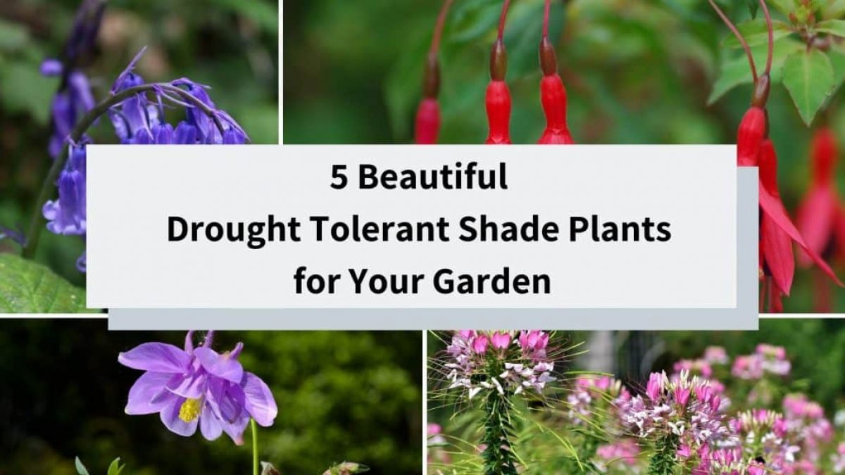 Drought Tolerant Shade Plants For Your Garden Better Landscaping